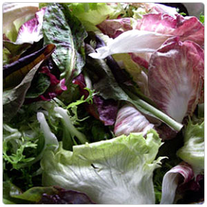 chicories-category