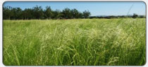grass-valley-grains