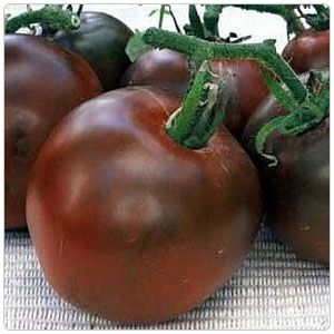Tomato - Black Prince