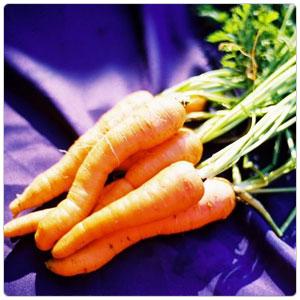 Carrot, Nantes