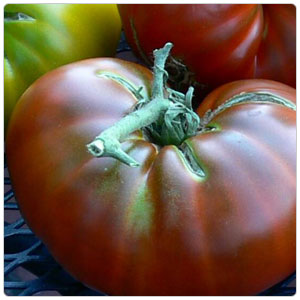 Tomato - Purple Cherokee