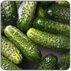 Cucumber - Pickling