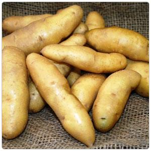 Fingerling Gold Potato
