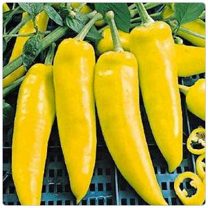 Pepper - Hungarian, Hot