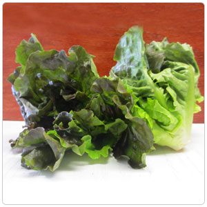 Lettuce - Red Leaf