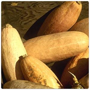 Squash - Banana