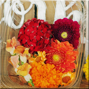 edible-flowers-marigold-calendula-sweet william-snap dragon-dahlia