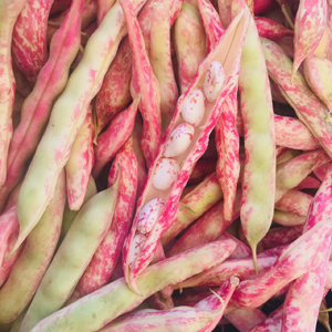 cranberry bean mc 300x300