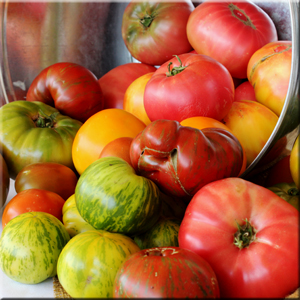 ray-yeung-local-heirloom-tomatoes-sacramento-valley