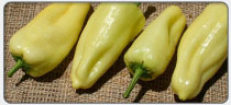 gypsy-peppers
