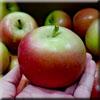 Fuji-apple-mm