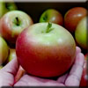 Fuji-apple-mm