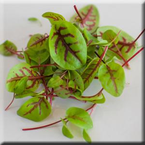Aldon's Leafy Greens