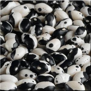 Black Calypso Beans