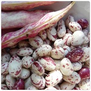 Bean - Cranberry