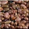 Pebble Beans