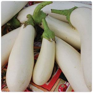 Eggplant - Casper