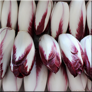 Endive - Red