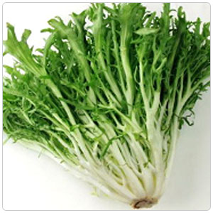 Endive - Curly