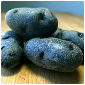 Fingerling Purple Potato