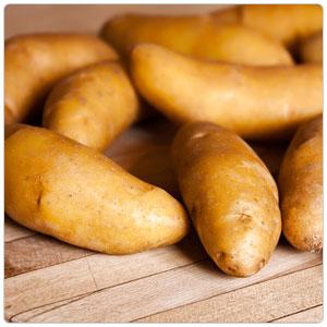 Fingerling Russian Banana Potato