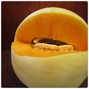 Melon - Gold Honeydew