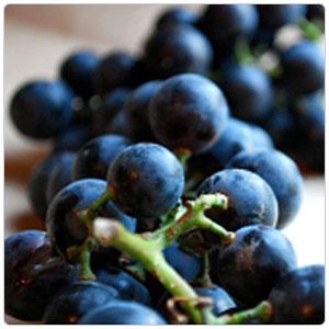 Grapes- Concord