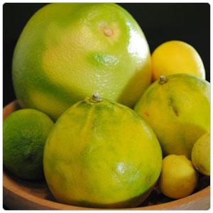 Grapefruit-Melogold