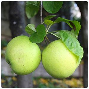 Puree - Green Apple