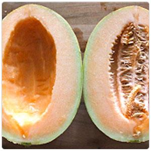 Melon - Honey Kiss