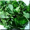 Kale - Mixed Baby (Organic)