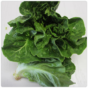 Lettuce - Rubicon Lettuce