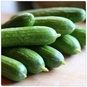 Persian Cucumber