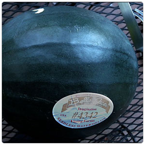 Melon-Watermelon, Black Imagination (Seedless)