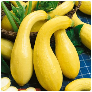 Yellow Crookneck Squash